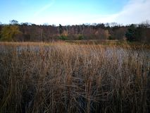Autumn Landscape Artistiek kijk in uitstekende levendige kleuren Royalty-vrije Stock Foto