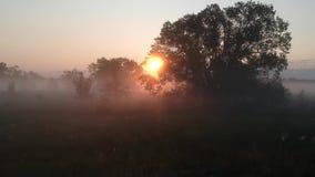 Autumn landscape. autumn landscape. Morning sun in dense fog. Autumn landscape. Morning sun in dense fog. Meditation fog morning in Ukraine stock video footage