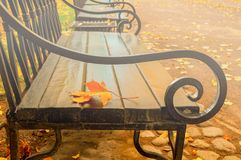 Autumn landscape. Autumn maple leaf on the wooden lonely bench in the autumn park Stock Images