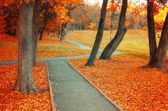 Autumn landscape. Autumn park alley with bare autumn trees and dry orange fallen leaves Royalty Free Stock Images