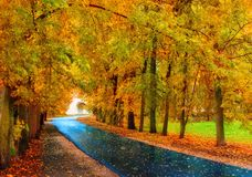 Autumn landscape. Autumn trees and autumn leaves on the wet footpath in autumn park alley after rain. Autumn landscape. Autumn trees with yellow foliage and stock photo