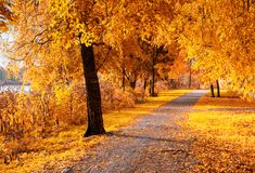 Autumn landscape. Autumn trees with fallen autumn leaves in sunny weather Stock Photography