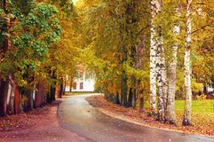 Autumn landscape. Autumn trees and fallen autumn leaves on the wet footpath in park alley after rain. Autumn landscape. Yellow autumn trees and fallen leaves on stock images