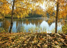 Autumn landscape, river and golden fall stock photography