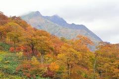 Autumn Landscape av vibrerande färgrika träd med bergskedjor royaltyfri bild