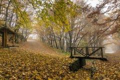 Autumn Landscape avec les arbres jaunes, montagne de Vitosha, Bulgarie Photographie stock libre de droits