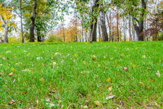 Autumn Landscape, background of autumn leaves. Stock Photo