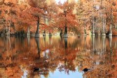 Autumn landscape. Bald Cypress Trees at Boulieu pond, France stock photography