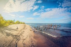 Autumn Landscape Baumstümpfe auf sandigem Ufer des Sees lizenzfreie stockfotos