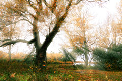 Autumn landscape with beams of the sun Royalty Free Stock Photos
