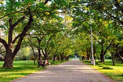 Autumn landscape - beautiful autumn walkway in park. Manchurian. Walnut alley. Sunny autumn day. Garden walkway with picturesque colorful autumn trees Royalty Free Stock Photography
