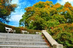 Autumn landscape. Beautiful colorful autumn city park with white benches Stock Image