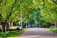 Autumn landscape - beautiful autumn walkway in park. walnut alle. Autumn landscape - beautiful autumn walkway in park. Manchurian walnut alley. Sunny autumn day Royalty Free Stock Images