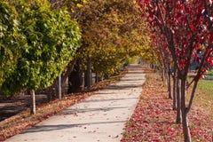 Autumn Landscape bello vicolo in un parco con gli alberi variopinti Mukachevo, Ucraina fotografia stock