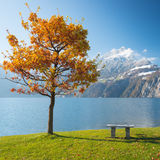 Autumn landscape with bench Stock Photography