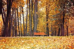 Autumn landscape. Bench under the orange autumn trees. In the colorful autumn park. Vintage tones applied Stock Photo