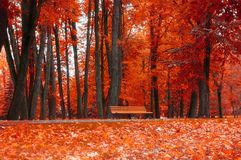 Autumn landscape. Bench under the orange autumn trees. In the colorful autumn park Stock Photos