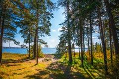 Autumn Landscape Berdsk, Sibéria, Rússia Imagem de Stock Royalty Free