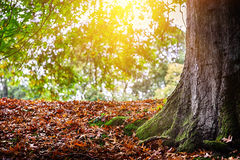 Autumn landscape with big oak tree Royalty Free Stock Photography