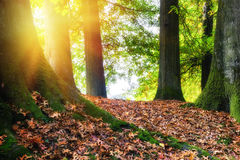 Autumn landscape with big oak tree Royalty Free Stock Photos