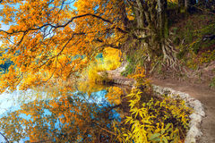Autumn Landscape - Big Yellow Tree and lake in park Stock Image