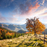 Autumn Landscape with Big Yellow Tree and Mountain Panorama Stock Image