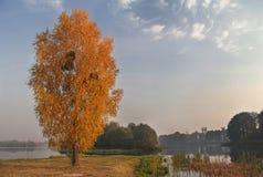 Autumn Landscape with birch Stock Photo