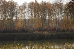 Autumn landscape. Birch grove on the shore of the pond stock photo
