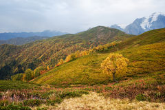 Autumn Landscape with a birch tree in the mountains of Georgia Stock Photo