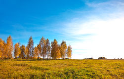 Autumn landscape Stock Photography