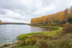 Autumn landscape. Birch with yellow leaves adorn the banks of the Grand river stock images