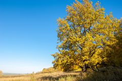 Autumn landscape, birches oak maple trees were painted in autumn. Colors, old grass. Collection of Beautiful Colorful Autumn Leaves green, yellow, orange, red royalty free stock photography