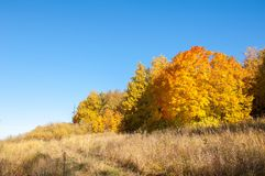 Autumn landscape, birches oak maple trees were painted in autumn. Colors, old grass. Collection of Beautiful Colorful Autumn Leaves green, yellow, orange, red stock image