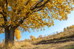 Autumn landscape, birches oak maple trees were painted in autumn. Colors, old grass. Collection of Beautiful Colorful Autumn Leaves green, yellow, orange, red royalty free stock image