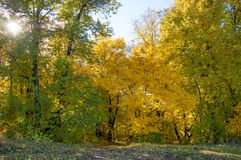Autumn landscape, birches oak maple trees were painted in autumn. Colors, old grass. Collection of Beautiful Colorful Autumn Leaves green, yellow, orange, red stock photo