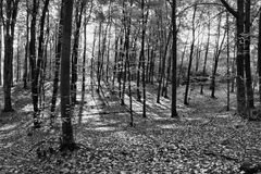 Autumn landscape black and white color Stock Photography