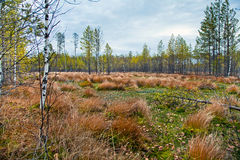 Autumn landscape with a bog. Royalty Free Stock Photography