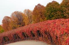 Autumn landscape in Botanischer Garten Schnbrunn, Austria Stock Photos
