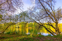 Autumn Landscape with Branchy Trees near Lake Stock Photo