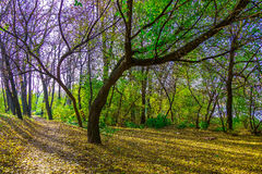 Autumn Landscape with Branchy Trees near Pathway Royalty Free Stock Images