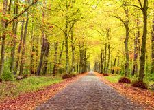Autumn landscape, brick road between trees, fallen leaves Royalty Free Stock Image