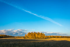 Autumn landscape. The bright colors of the autumn forest in the rays of the setting sun. Beautiful blue sky with small clouds Royalty Free Stock Photo