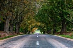Autumn Landscape Camino rural solo con los callejones de hojas caducas fotos de archivo libres de regalías