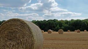 Autumn Landscape Campo de la cosecha con la bala de la paja almacen de metraje de vídeo