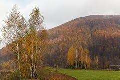 Autumn landscape in the Carpathians Royalty Free Stock Image