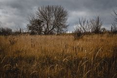 Autumn Landscape Ciel grave sombre, arbres nus isolés dans un domaine jaune photographie stock libre de droits