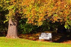 Autumn landscape in city park. Stock Photos