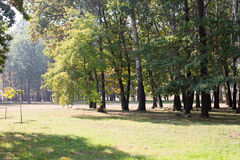 Autumn landscape in a city park. Large trees and fields Stock Photo