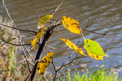 Autumn landscape in the city park leaves of trees close up Royalty Free Stock Images