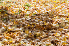 Autumn landscape in the city park leaves of trees close up Stock Photo